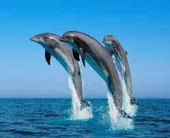 Gangatic River Dolphin: National Aquatic Animal Of India – BLOGS